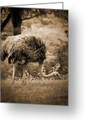 Arne J Hansen Greeting Cards - Ostrich Greeting Card by Arne Hansen