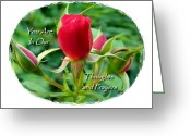 Sentiments Greeting Cards - Our Thoughtful Rose Sentiments Greeting Card by Cindy Wright
