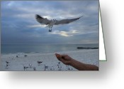 Gloaming Greeting Cards - Out of My Hand Greeting Card by T C Creations