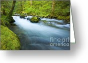 Creekm Stream Greeting Cards - Out of the Rainforest Greeting Card by Mike  Dawson