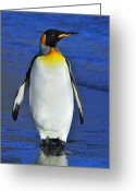Austral Greeting Cards - Out Of Water Greeting Card by Tony Beck