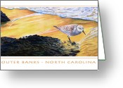 Sandpiper Greeting Cards - Outer Banks Sanderling Greeting Card by Bob Nolin