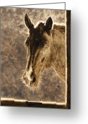 Equines Painting Greeting Cards - Outside Lookin In Greeting Card by Simona Tarakeviciute