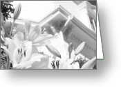 Flowers Pictures Greeting Cards - Over White Lily Black and White Flowers Greeting Card by Dapixara Art