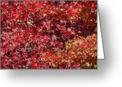 Red Leaves Greeting Cards - Overpopulation Greeting Card by Donna Blackhall