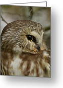 Kingston Greeting Cards - Owl Eye Greeting Card by Joshua McCullough