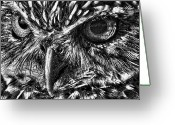Burrowing Owl Greeting Cards - Owl Eyes Greeting Card by Larry Linton
