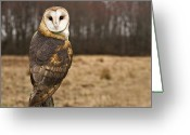 Camera Greeting Cards - Owl Looking At Camera Greeting Card by Jody Trappe Photography