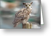Barred Owl Greeting Cards - Owl Love Greeting Card by David  Naman