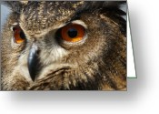 Bird Of Prey Digital Art Greeting Cards - Owl Up Close Greeting Card by Paulette  Thomas