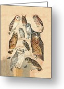Long Eared Owl Greeting Cards - Owls Greeting Card by Eric Kempson