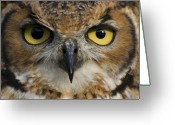 Claire Copley Greeting Cards - Owls Eyes Greeting Card by Pixie Copley