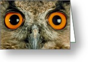 Long Eared Owl Greeting Cards - Owls Eyes Greeting Card by Tony Mcconnell