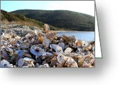 Oysters Greeting Cards - Oyster Shell Hill at Drakes Bay Oyster Company in Point Reyes California . 7D9849 Greeting Card by Wingsdomain Art and Photography