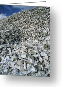 Mound Greeting Cards - Oyster Shells Greeting Card by Alan Sirulnikoff