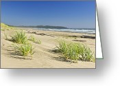 Dunes Greeting Cards - Pacific ocean shore on Vancouver Island Greeting Card by Elena Elisseeva