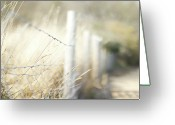 Fence Greeting Cards - Pagham Harbour Fence Greeting Card by SVGiles