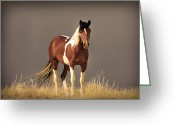 Wild Horses Greeting Cards - Paint Filly Sepia Sky Greeting Card by Rich Franco