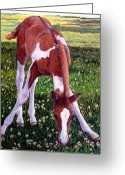 Bay Horse Greeting Card Greeting Cards - Paint Horse Foal Portrait Greeting Card by Olde Time  Mercantile