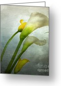 Filled Greeting Cards - Painted Arum Greeting Card by Bernard Jaubert