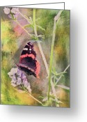 2d Greeting Cards - Painted Butterfly Greeting Card by James Steele