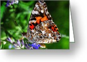 Sage Green Greeting Cards - Painted Lady Butterfly Greeting Card by Karen Slagle