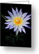 Water Lilly Greeting Cards - Painted Lily Greeting Card by Steve McKinzie