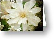 Star Magnolias Greeting Cards - Painted Magnolia Greeting Card by Cathie Tyler