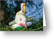 Nature Greeting Cards - Painted Stork Greeting Card by Nila Newsom