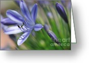 Stamen Greeting Cards - Painterly Agapantha Greeting Card by Kaye Menner