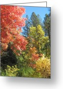 Changing Colors Greeting Cards - Painters Palette Greeting Card by Sandy Tracey