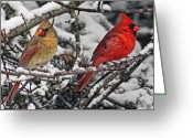 Cardinals In Snow Greeting Cards - Pair of Cardinals in Winter Greeting Card by Peg Runyan