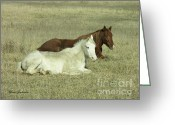 Grass Pyrography Greeting Cards - Pair of Horses Greeting Card by Yumi Johnson