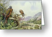 Perched Birds Greeting Cards - Pair of Red Kites in an Oak Tree Greeting Card by Carl Donner