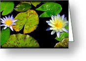 Water Lilly Greeting Cards - Pair of Water Lillys Greeting Card by Steve McKinzie