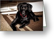 Retriever Prints Photo Greeting Cards - Paisley Greeting Card by Cathy Smith