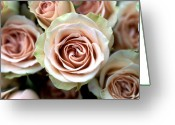 Kathy Yates Photography. Greeting Cards - Pale Pink Roses Greeting Card by Kathy Yates