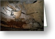 Rock Drawings Greeting Cards - Paleolithic Art Of Bulls On Calcite Greeting Card by Keenpress