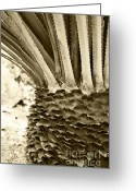Sepia Toned Greeting Cards - Palm Abstraction Greeting Card by Ben and Raisa Gertsberg