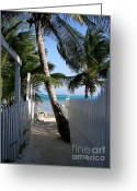 Sand Fences Photo Greeting Cards - Palm Alley Greeting Card by Karen Wiles