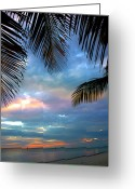 Evening Light Greeting Cards - Palm Curtains Greeting Card by Susanne Van Hulst