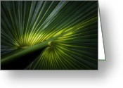 Palm Leaf Greeting Cards - Palm Fan Greeting Card by Cynthia Dickinson