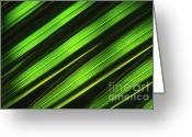 Palm Leaf Greeting Cards - Palm Frond Abstract Greeting Card by Sandra Bronstein