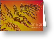 Palm Leaf Digital Art Greeting Cards - Palm Frond in the Summer Heat Greeting Card by Kaye Menner