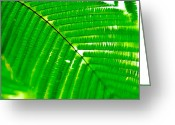 Palm Leaf Digital Art Greeting Cards - Palm Leaf Greeting Card by Andres LaBrada