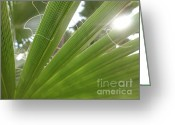 Palm Leaf Digital Art Greeting Cards - Palm leaf Greeting Card by Claudia Burlager