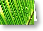 Palm Leaf Greeting Cards - Palm Leaf Greeting Card by Scott Pellegrin