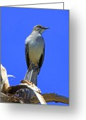 Mocking Greeting Cards - Palm Mocking Bird Greeting Card by Deborah Benoit