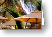 Shade Greeting Cards - Palm Serenity Greeting Card by Karen Wiles