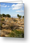 Desert Greeting Cards - Palm Springs Indian Canyons View  Greeting Card by Ben and Raisa Gertsberg